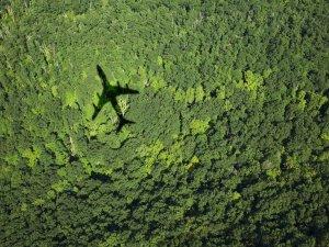 cien samolotu na tle lasu