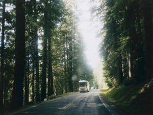 bialy bus jadacy przez las